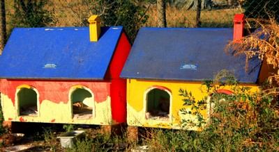 Shelters for cats in Torcello